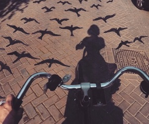 biking, birds, and color image