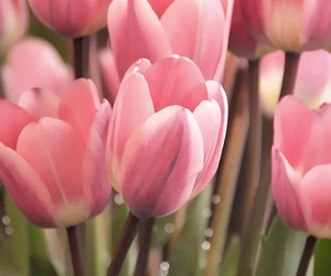 spring, flowers, and season image