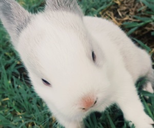 bunny, grey, and love image
