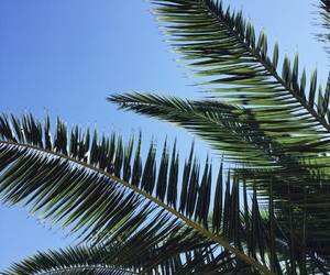 blue sky, nature, and palm image