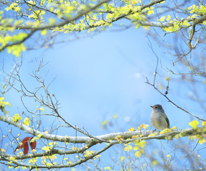 bird and spring image