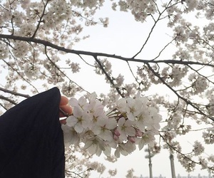 aesthetic, cherry blossom, and korean image