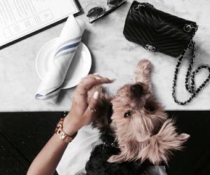 bag, dog, and purse image