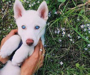 pretty and puppy image
