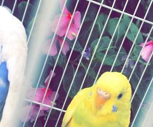 💕 and سنابي،تصويري،سنابات، image