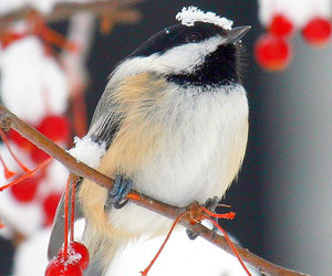 bird, winter, and forest image