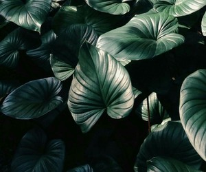 green, leaves, and tropical image