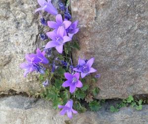 flowers, mine, and purple image