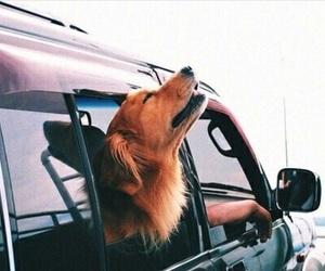 dog, car, and animal image
