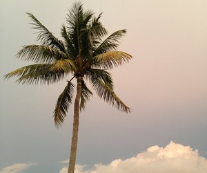 palm trees, sky, and clouds image