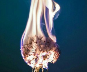 fire, photography, and beautiful image