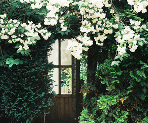 flowers, green, and door image