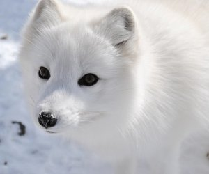 arctic, cutie, and white image