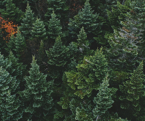 green, nature, and forest image