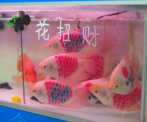 fish, pink, and grunge image