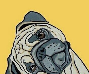 wallpaper and pug image