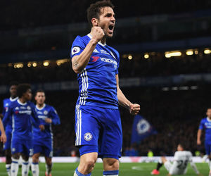 Chelsea and cesc fabregas image