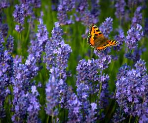 butterfly, nature, and field image