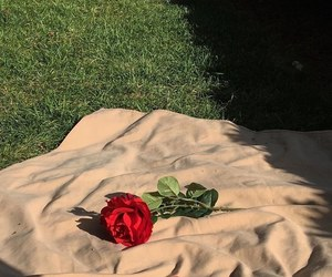 rose, aesthetic, and red image