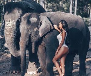 elephant, animal, and fashion image