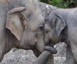 elephant and elephantandbaby image