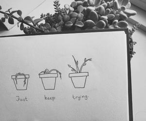plants, grunge, and tumblr image