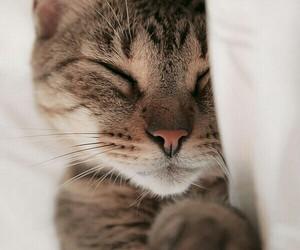 cat, sleep, and sweet image