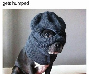 animals, funny pictures, and dogs image