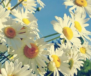 daisy and spring image