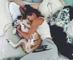 dogs, sleeping, and soft image