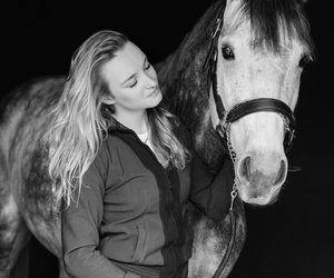animal, equestrian, and grey image