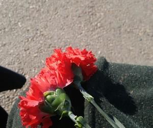 rose and karanfil image