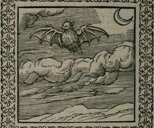 art, bats, and gothic image