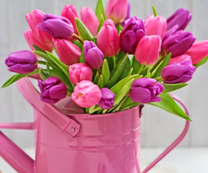 floral arrangement, tulips, and flowers image