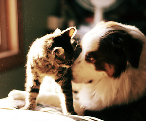 cat, cute, and dog image