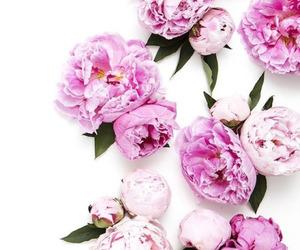 decoration, garden, and flower image