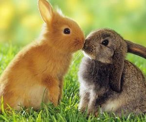 awww, love, and bunny image