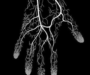 hand, art, and veins image