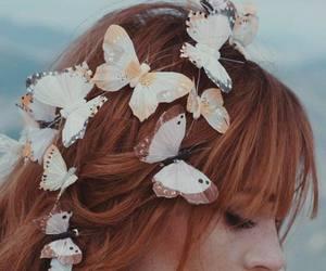 redhead butterflies image