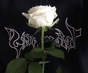 theme, rose, and flowers image