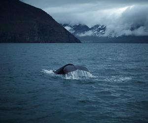 sea, whale, and animal image