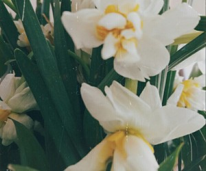daffodil, nostalgia, and flower image
