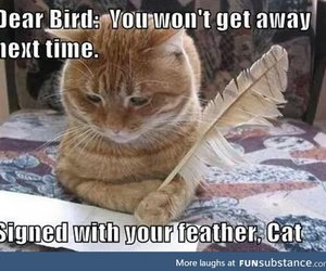 cat, funny, and bird image