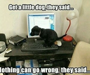 funny, puppy, and animals image