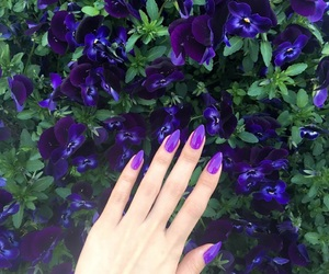nail, violet, and nails image