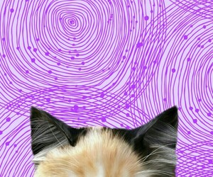 background, pink, and psicodelic image