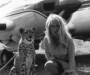 cheetah and vintage image