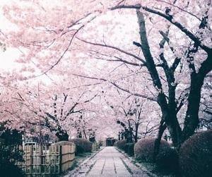 flowers, japan, and tree image