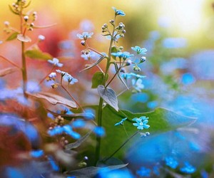 beautiful, flower, and blue image