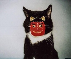 cat and japanese image